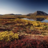 Tundra with fall colours, AK