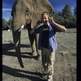 The wonderful Adam White, compares aural appendages with a pachyderm. 'Wild New World', 2001