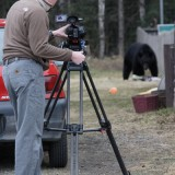 Filming Black Bear in suburban Anchorage - a familiar sight on garbage collection day (the bear, not me). 'Moose on the Loose', 2005